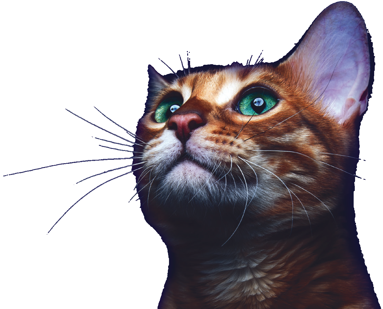 Rabbits, Small Furries & Exotic Pets