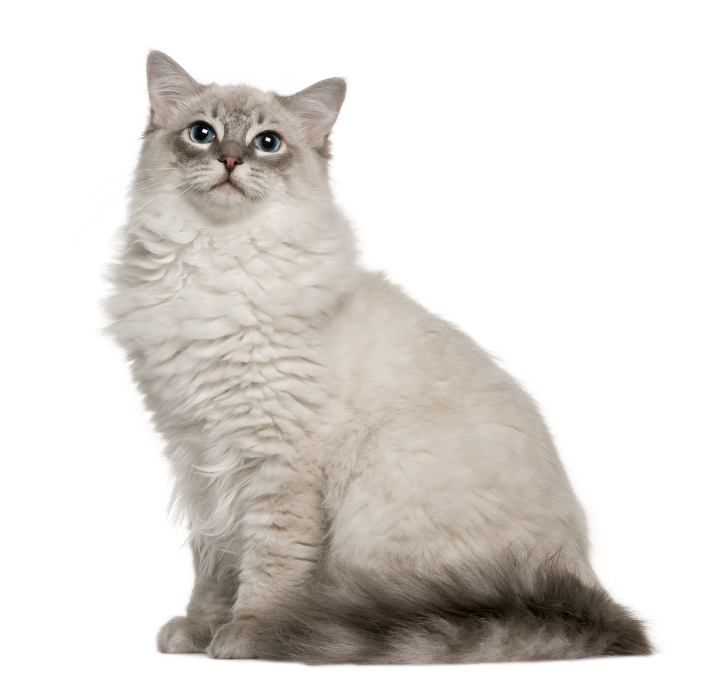 Genetic Diseases and Cat Breeds
