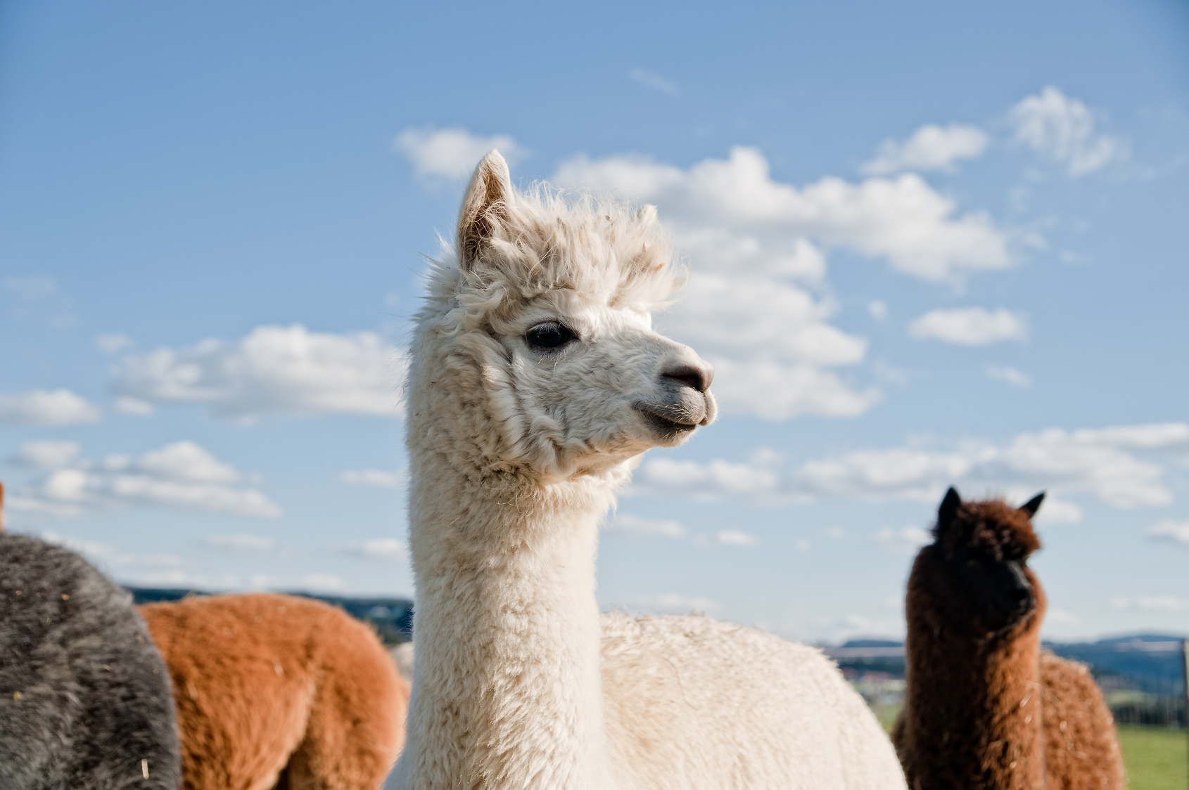 Small Ruminant and Camelid Referral Services