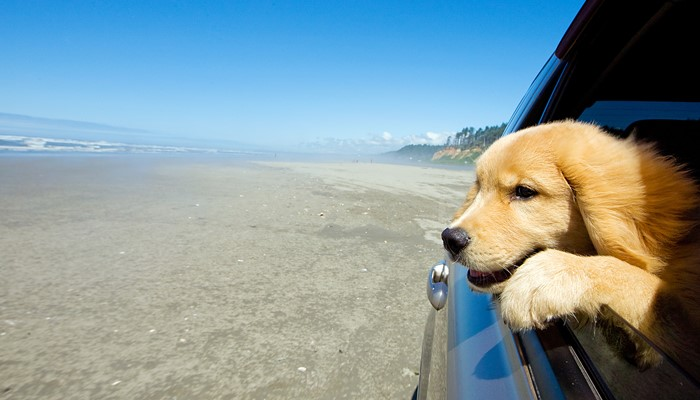 New Guidance for Pet Travel to EU