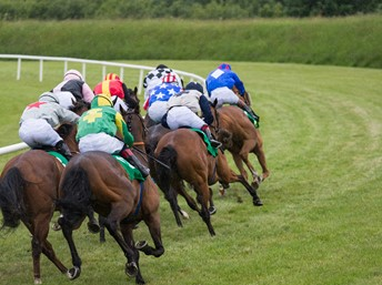 Horses racing away from the viewer